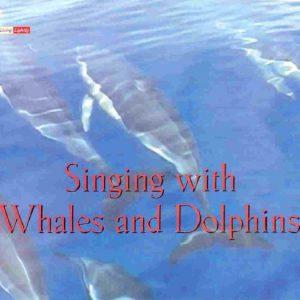 whalesanddolphins-e1403420501402